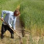 آب کشت تابستانه خوزستان تامین است